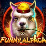 Funny Alpaca